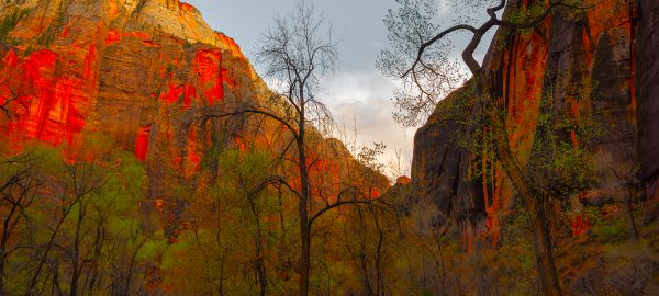 Zion Fineart Photography Prints Buy Nickpsomiadis