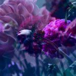Field of Dahlia's – Garden of Love series – Ltd Ed Print