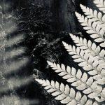 Deep in the woods – Love Thy Nature series – Ltd Ed Print