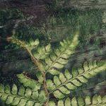 Fern Whispers – Love Thy Nature series – Ltd Ed Print