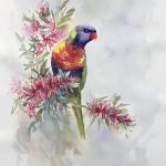 Rainbow Lorikeet and Bottlebrush Native Flowers