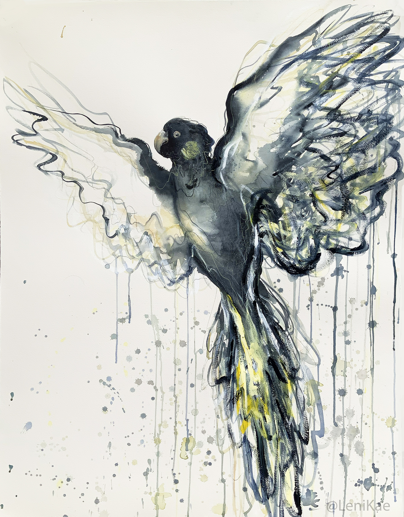 2a. Sydney Artist Leni Kae Flight Of The Yellow Tailed Black Cockatoo Bird Art Painting