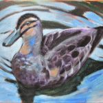 Australian Black Duck