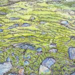 Moss and the Fullness of Life