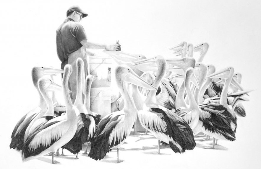Pelicanfeedingwebreducecandaceslager 1024x786