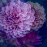 My true love – Garden of Love series – Ltd Ed Print