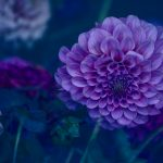 One Love – Garden of Love series – Ltd Ed Print