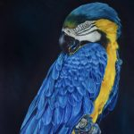 Blue and yellow macaw – Blue heaven
