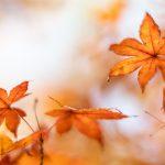 Autumn Fire — Ltd Ed Print