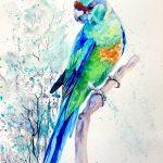 Australian Ringneck Parrot