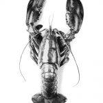 lobster romance