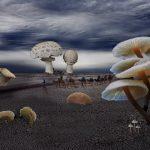 A Walk Through the Fungi
