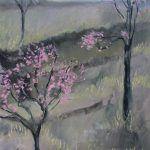 Peach Trees, Gordon Country