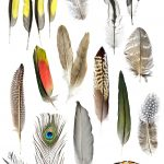 Feather Collage – The Sequel,  Ltd Ed Print
