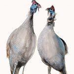 Two Guinea Fowl