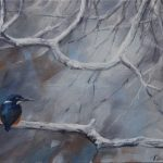 Kingfisher Watching