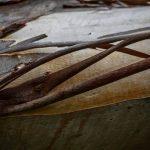 Chocolat – Personality of a tree – Ltd Ed Print