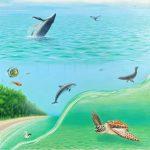 Australia's Coastal Delights