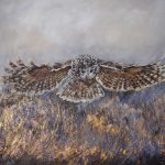 Barred Owl – She Brings In The Light