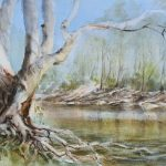 River Gum on the Murray