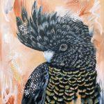 Bridget -Red Tailed Black Cockatoo