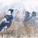 Magpies – You Can Come Out Now