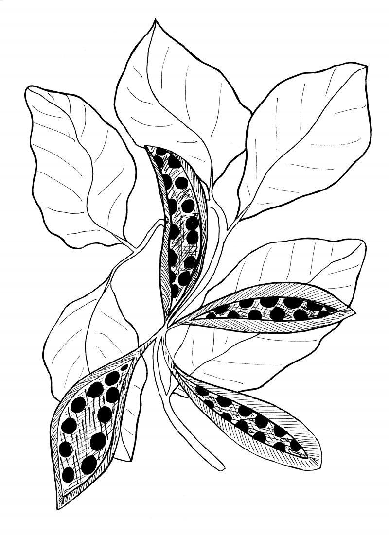 Plant 193 800x1101