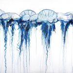 Swarm 3 – bluebottles