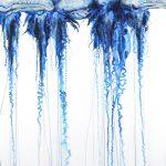 Swarm 2 – bluebottles