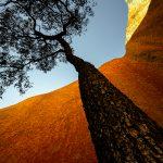 Uluru Jarrah – Ltd Ed Print
