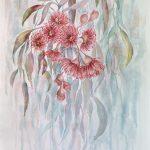 Blushing Pink Gum Blossoms Australian Native Flowers