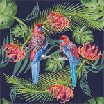 Crimson Rosellas Indigo Ltd Edition Giclee Print