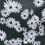 33 Flowers