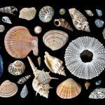 Seashells by the Seashore – Black Ltd Ed Print