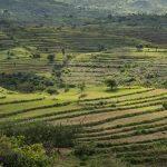 Ethiopian Green – Ltd Ed Print