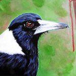 Magpie Contemplation
