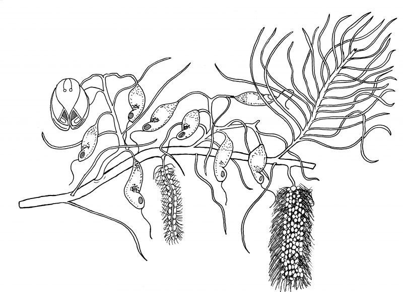 Plant 03 800x581 (1)