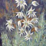 Coastal Flannel Flowers