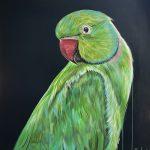 Indian ring – necked parakeet