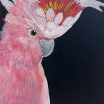 Pink Cockatoo on black