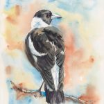 Rusty the Magpie
