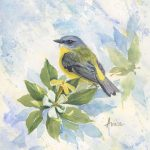 Robin in Native Frangipani