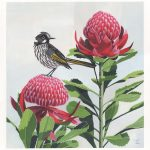 The Honey Eater and The Waratahs