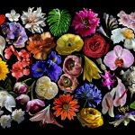 Flowers – Ltd Ed Print