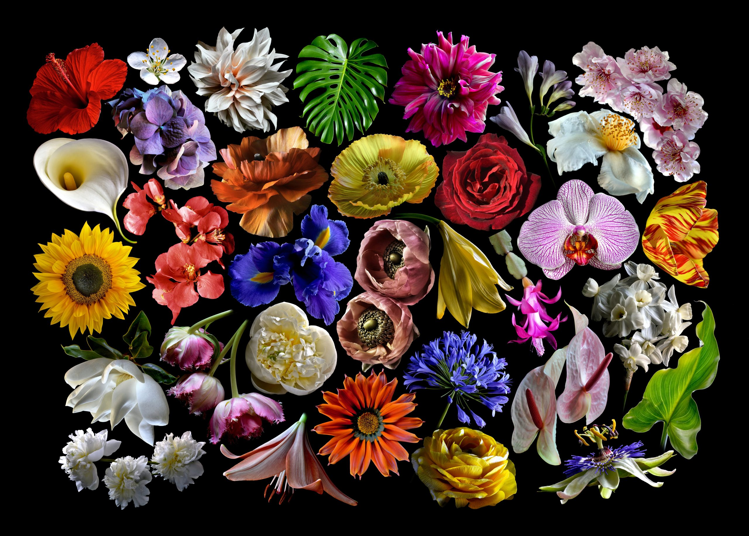 Floral Collage 01