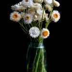 White Strawflowers in Mason Jar ~ Ltd Ed Print